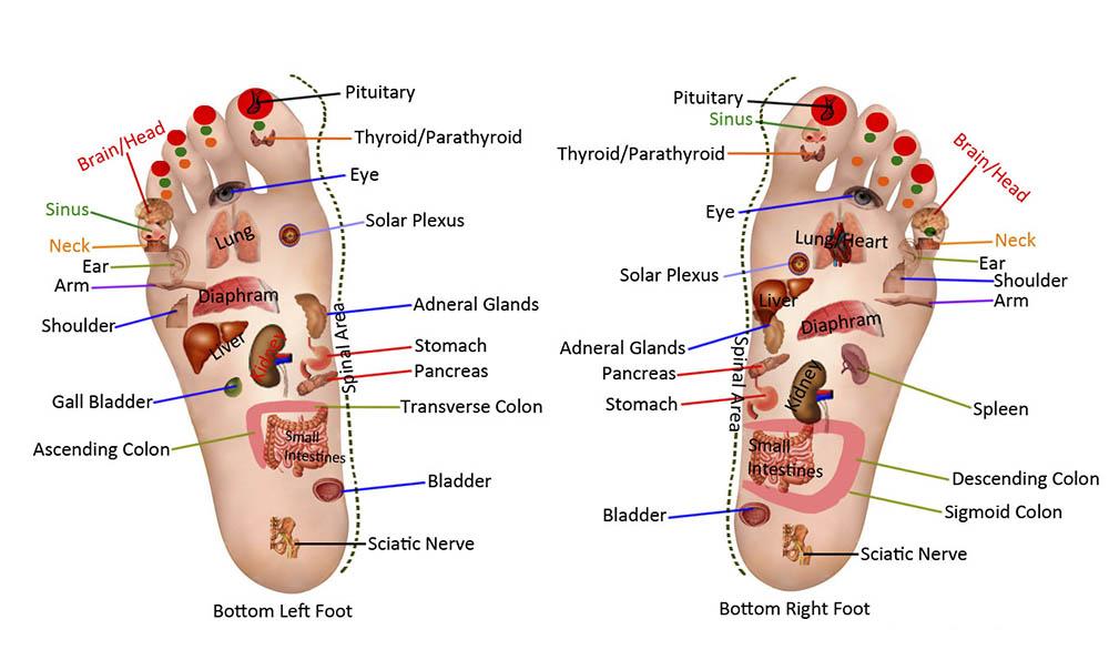 Reflexology foot zones. North Adelaide Wellness